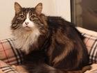 Фотография в Кошки и котята Продажа кошек и котят Прекрасная и обаятельная кошечка Варя, возраст в Москве 0
