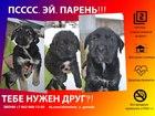 Фотография в Собаки и щенки Продажа собак, щенков Если вы начали читать это объявление- значит в Москве 0