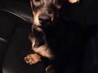 Фотография в   На даче в дровянике нашли щенка, замёрзал в Москве 0
