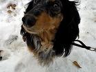 Скачать бесплатно изображение  Квартирная передержка собак в Москве 37855163 в Москве