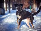 Фотография в   Умнейшая собака Берта ищет свою семью!   в Москве 0
