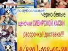 Фотки и картинки Сибирский хаски смотреть в Москве