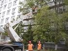 Фото в   Выполняем работы:   -Спил деревьев  - кронирование в Москве 600