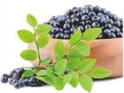 Скачать фотографию Косметика Средства от купероза, Aronia berry extract 38310334 в Абзаково