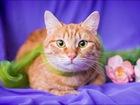 Изображение в   Молодой зеленоглазый котик по имени Рыжик в Москве 0