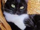 Фото в   Маленькая черно-белая кошечка была найдена в Москве 0