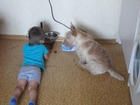 Скачать бесплатно изображение Вязка собак ищу девочку для вязки 38775952 в Москве