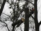 Смотреть фотографию  Сил опасных деревьевп, планировка участков 38877996 в Череповце