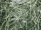 Смотреть фотографию Корм для животных Сено луговое, хорошего качества в тюках 38950502 в Москве