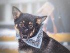 Изображение в Кошки и котята Продажа кошек и котят В добрые руки пристраивается невероятная в Москве 1