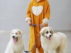 Фотки и картинки Пиренейская горная собака смотреть в Москве