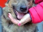 Изображение в   Ищет дом молодой пёс (1 год) по имени Бублик. в Москве 0