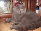 Скачать foto Вязка Вязка с котом 39235741 в Москве
