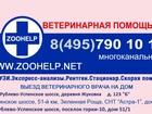 Скачать изображение  Услуги грумера 39362493 в Одинцово