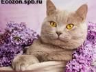 Скачать бесплатно изображение  Кошачий дезинфектор, 39493059 в Санкт-Петербурге