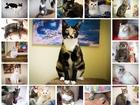 Уникальное изображение  Кошки и коты фонда УМКА ждут своих хозяев! Подарите им это счастье 39712779 в Владивостоке