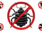 Увидеть foto  Услуги по обработке от насекомых и грызунов, 39807318 в Краснодаре