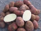 Скачать бесплатно фотографию  Картофель оптом от производителя продам, 39968064 в Москве