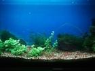 Скачать бесплатно foto Аквариумы продам аквариум 100 литров цена договарная звоните 40562925 в Москве