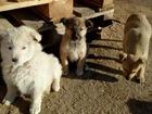 Скачать бесплатно foto  Очаровательные щенки ищут дом, 45877243 в Москве