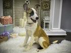Скачать бесплатно фото  Трое замечательных щенков срочно ищут дом! 45997738 в Москве