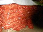 Уникальное фотографию  Овощи Лук оптом 5+ Москва 53213461 в Москве