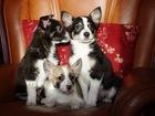 Увидеть фотографию  Милые щенки в добрые руки, 56081618 в Москве
