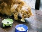 Новое фото Другие животные Натуральные корма – правильное питание ваших любимцев! 56765506 в Москве