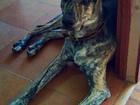 Уникальное фотографию  Молодой пес срочно ищет дом! 66538761 в Москве