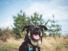 Увидеть foto  Чудесная собака Лада в добрые руки, 66564802 в Москве