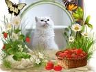 Скачать бесплатно фото Вязка кошек Вязка-Британец шиншилла поинт с голубыми глазами 67765748 в Москве