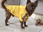 Скачать бесплатно изображение Вязка собак Ищем невесту для вязки, мальчик 3 года, шоколадный 67766064 в Москве