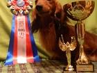 Скачать бесплатно изображение Вязка собак вязка, такса для вязкипредлагаем кобеля таксы для вязок 67793445 в Москве
