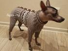 Новое foto Одежда для собак Вязаная одежда для Ксоло и КХС, Перуанских голых собак 67834442 в Москве