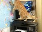 Просмотреть foto  Передержка котов гостиница для животных 67971501 в Санкт-Петербурге