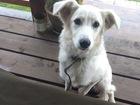 Скачать бесплатно изображение  Чудесный щенок Белочка ищет дом! 68262243 в Москве