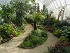 Просмотреть фотографию  Озеленение интерьера, Зимние сады 68399140 в Москве