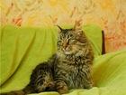 Уникальное фотографию  Молоденькая кошечка Жозефина в добрые руки 68426390 в Москве