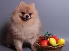 Просмотреть изображение Вязка собак Кремовый шпиц, мини вес 2 кг, приглашает на вязку 68756008 в Москве