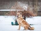 Свежее изображение  Чудесная собачка Луша ищет дом, 69000853 в Москве