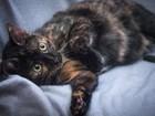 Фотки Домашняя кошка смотреть в Москве