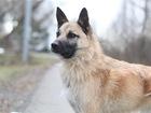 Просмотреть изображение  Чудесный пес Родик ищет дом, 69173897 в Москве