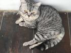 Смотреть изображение  Вязка кошек разной породы 69207073 в Краснодаре
