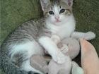 Новое фото  Очаровательные котята ищут дом! 69680747 в Санкт-Петербурге