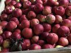 Увидеть фотографию  Яблоки калиброванные оптом от производителя 69729670 в Краснодаре