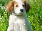 Скачать бесплатно фото  Самые милые на свете щенки в добрые руки! 70270018 в Москве