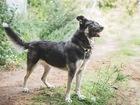 Новое фото  Чудесная собака Лада в добрые руки, 70495539 в Москве