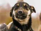 Просмотреть изображение  Ищут дом чудесные щенки Алиса и Кирюша, 74675108 в Москве
