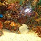 Морской аквариум Juwel 125 литров под ключ