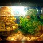 аквариум с двумя черепахами